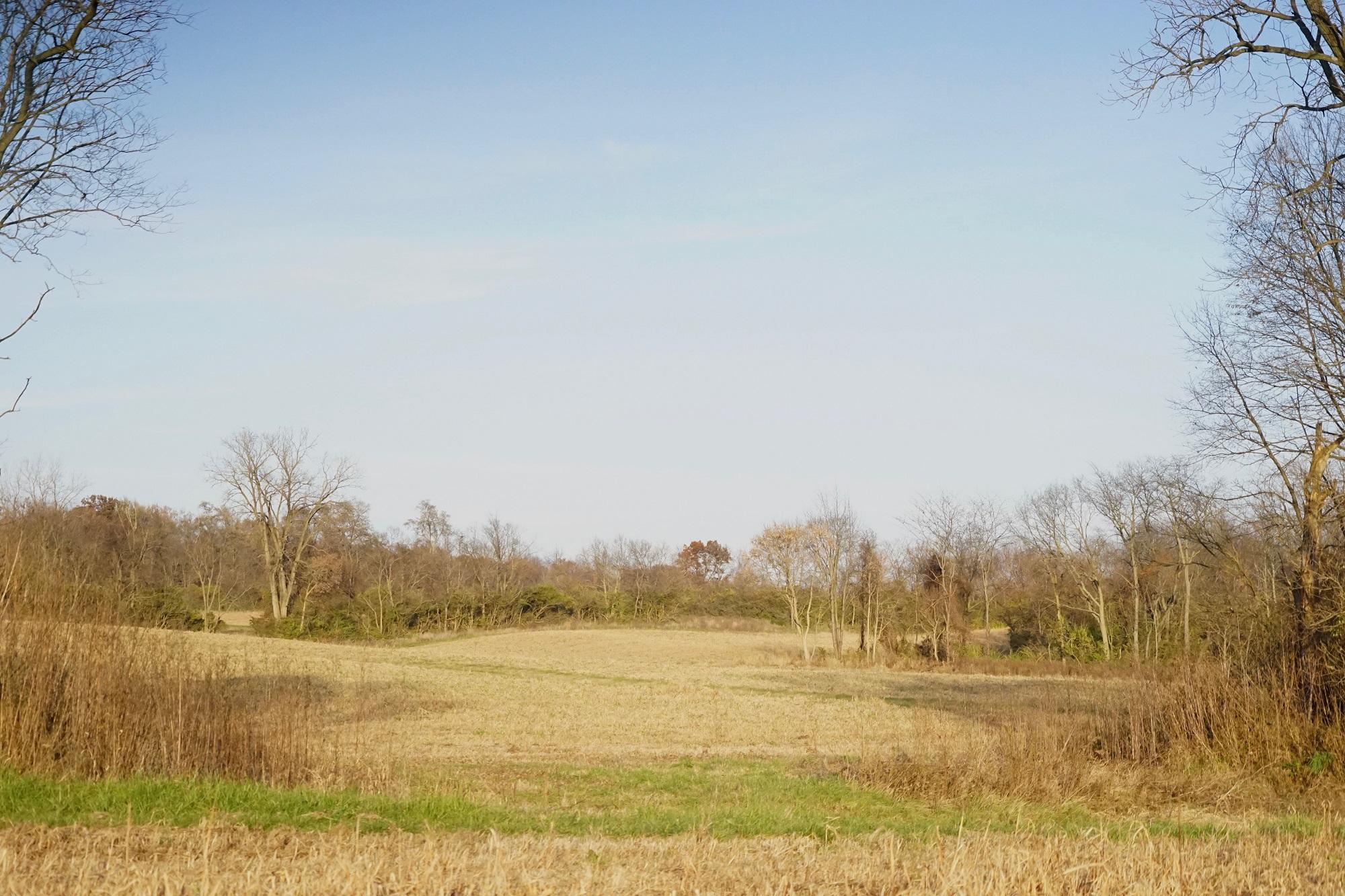 Field 2-late fall smaller.jpg