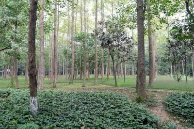Trees_-_Chengdu_Botanical_Garden_-_Chengdu,_China_-_DSC03515.JPG
