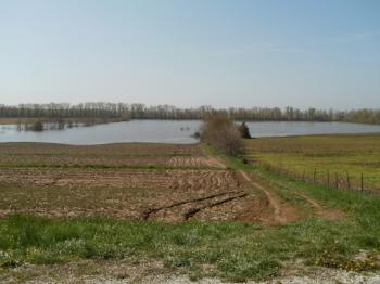 River floods soybeans.jpg