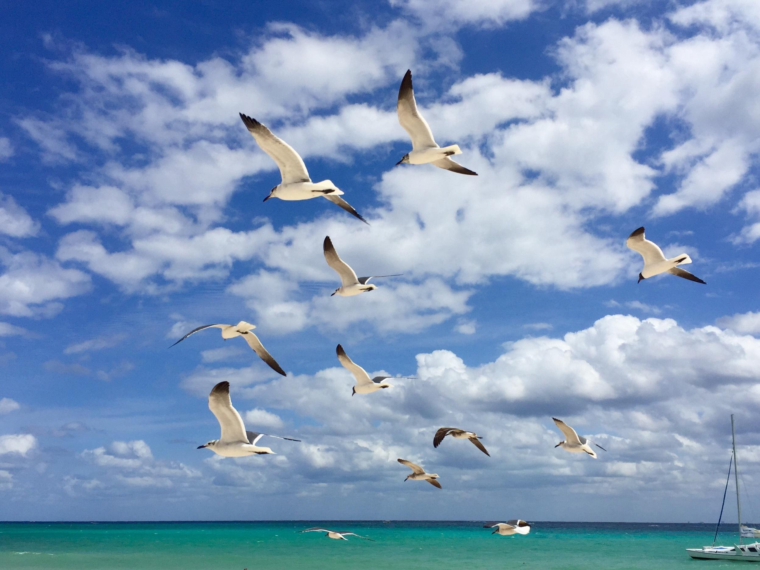 Arriving in Playa Del Carmen!