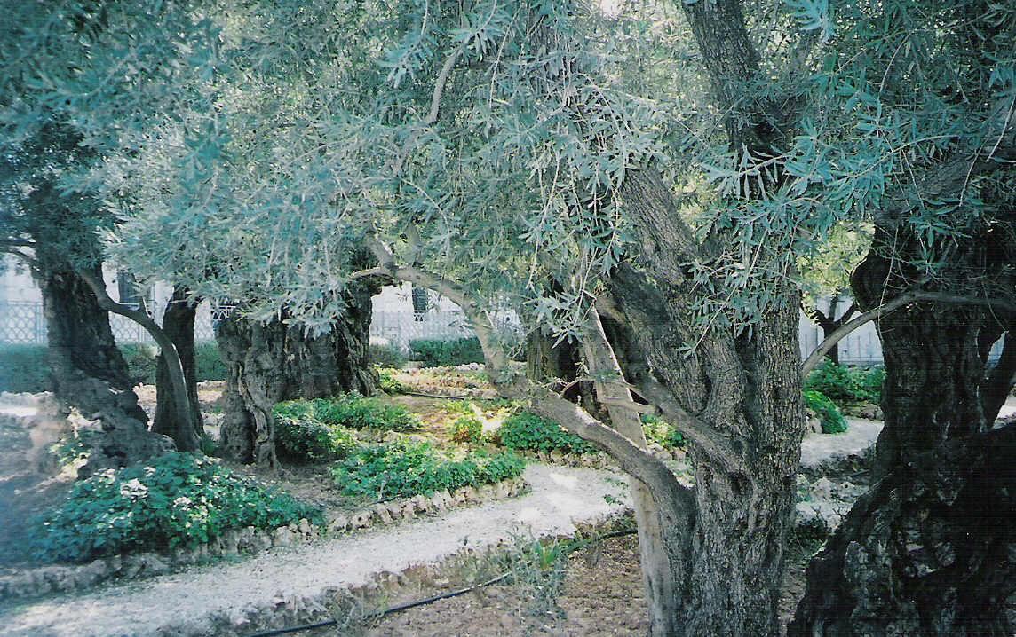 mount-of-olives-garden-ogethsemane-holy-land-tours.jpg