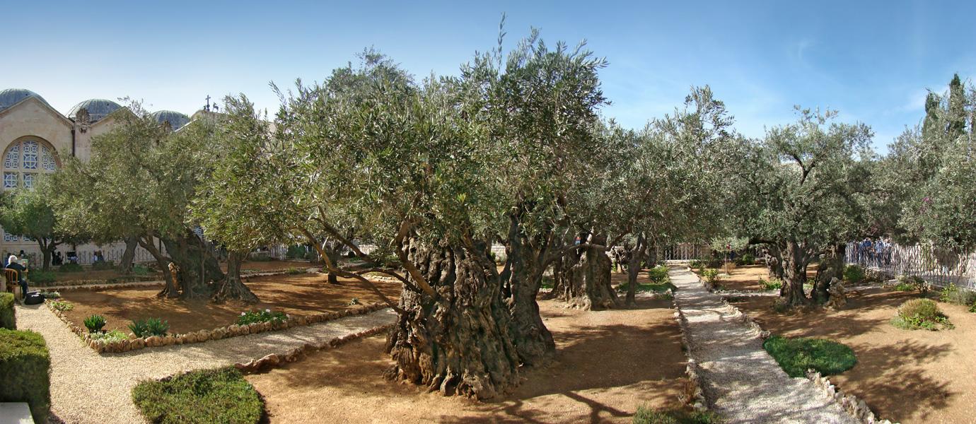 Jerusalem-Gethsemane-holy-land-tours.jpg