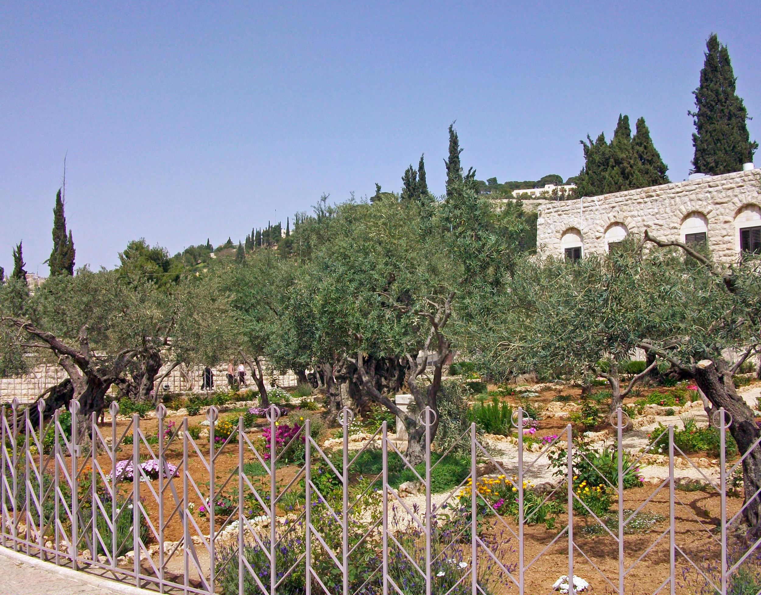 Garden_of_Gethsemane_holy_land_tours.jpg