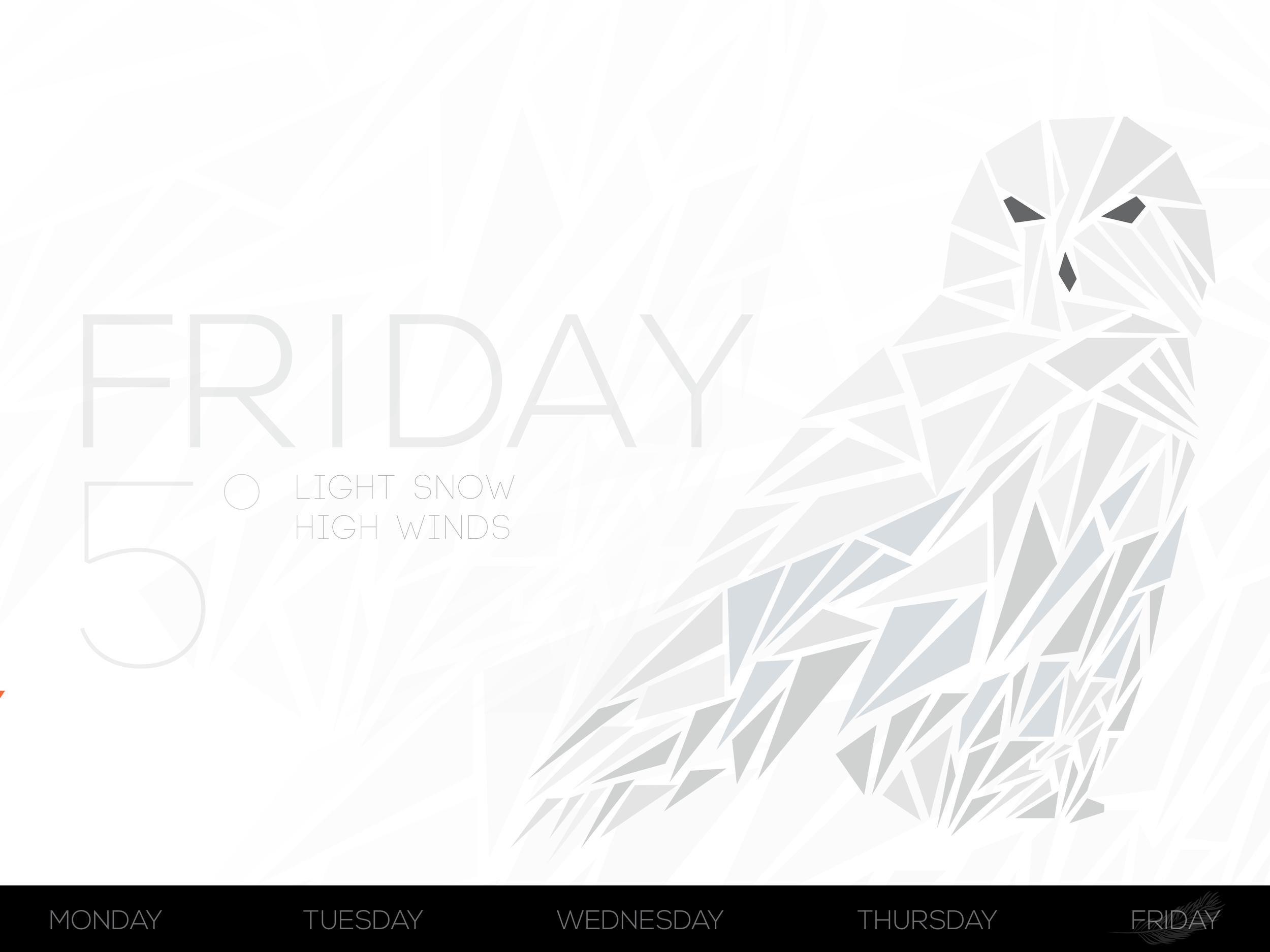 bird_6.jpg