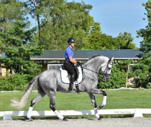 Carmen Elisa Franco - 954-536-4264 queca@q-equestrian.com,  www.Q-Equestrian.com