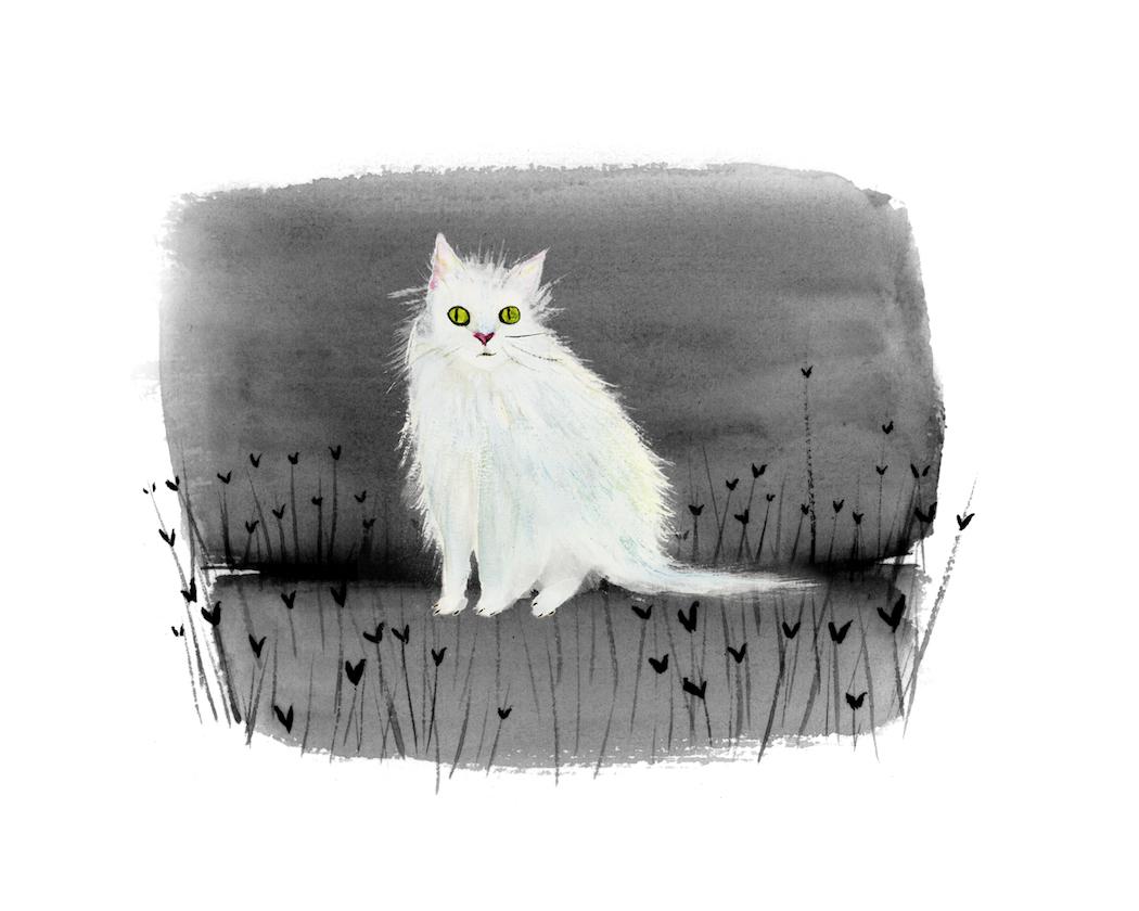 catwhiteghost.jpg