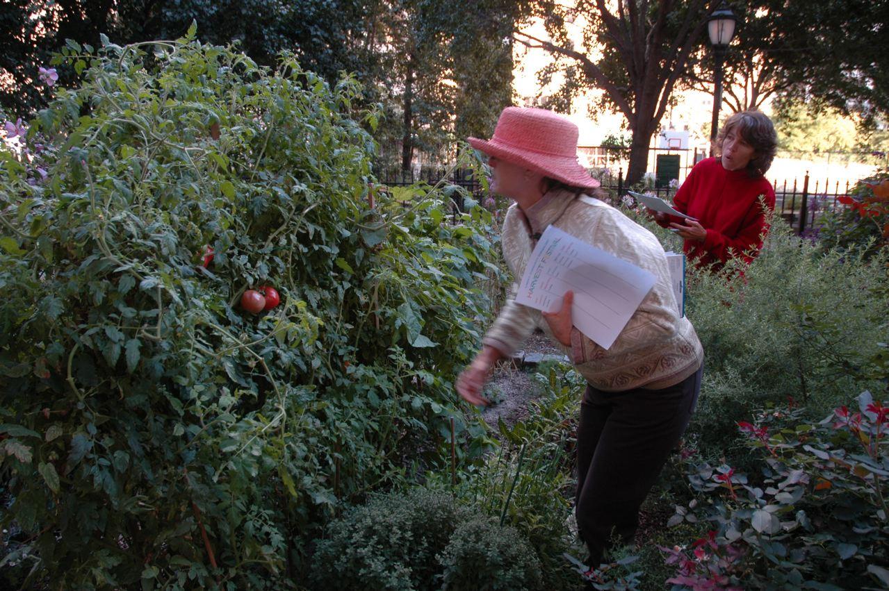 LCG 2007 HarvestFestivalwhoatomatoes.jpeg