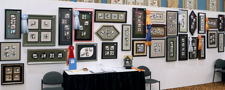 Our work (red box) hanging on display the 2015-16 International level after winner second place at regionals.