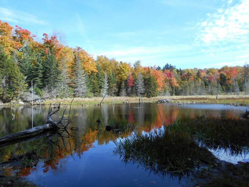 Beaver Pond, near Savoy Hollow Road