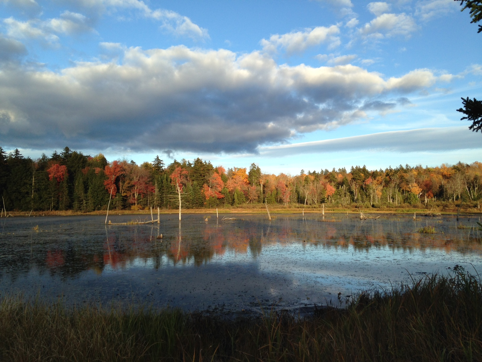 Beaver Pond, Crane Road