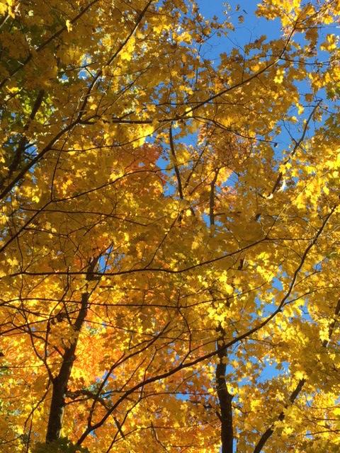 Golden Canopy, Nobody's Road
