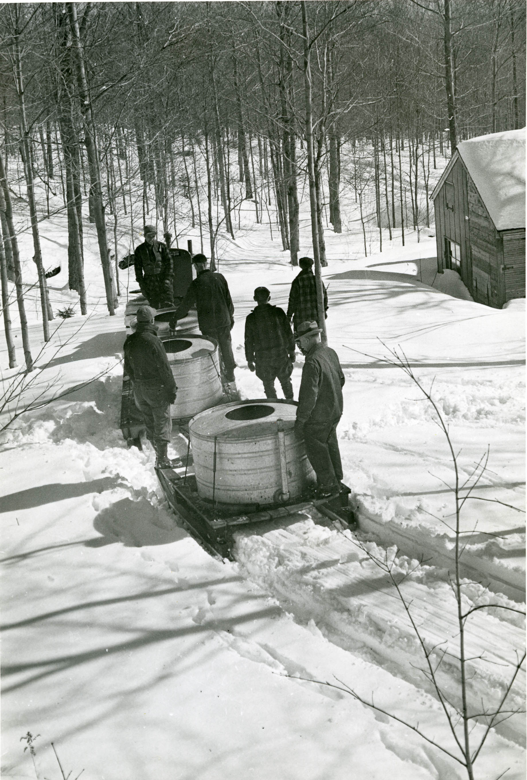 Collecting sap at Helenscourt [Photo, c. 1940s, courtesy of the Arthur D. Budd Papers. The Trustees of Reservations, Archives & Research Center]