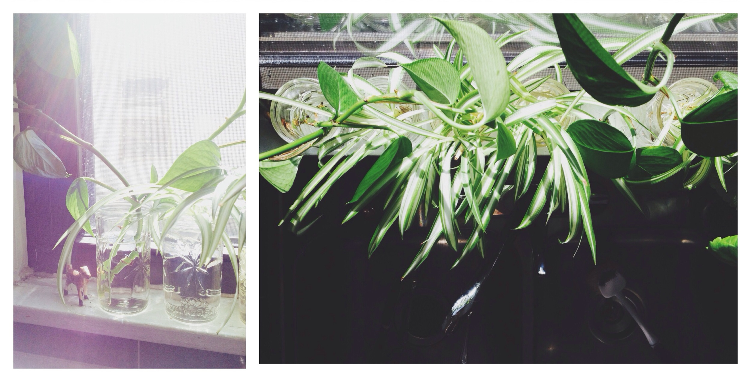 plant-clippings-rooting.jpg