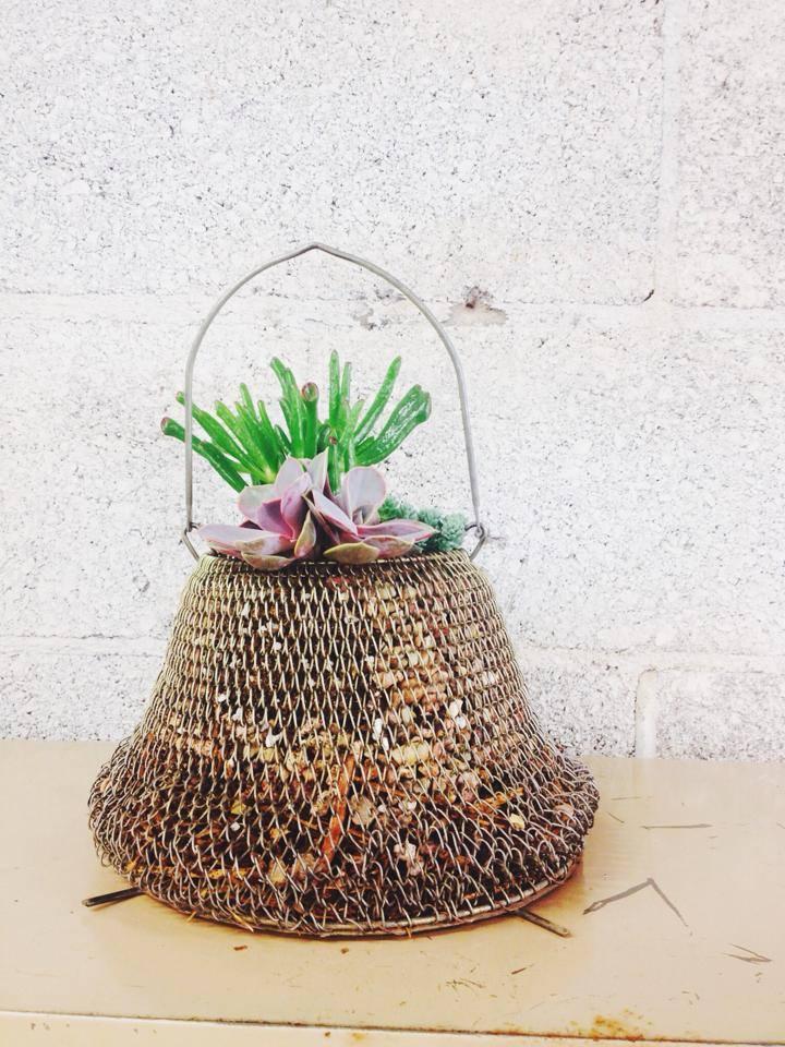 fishingbasketsucculent