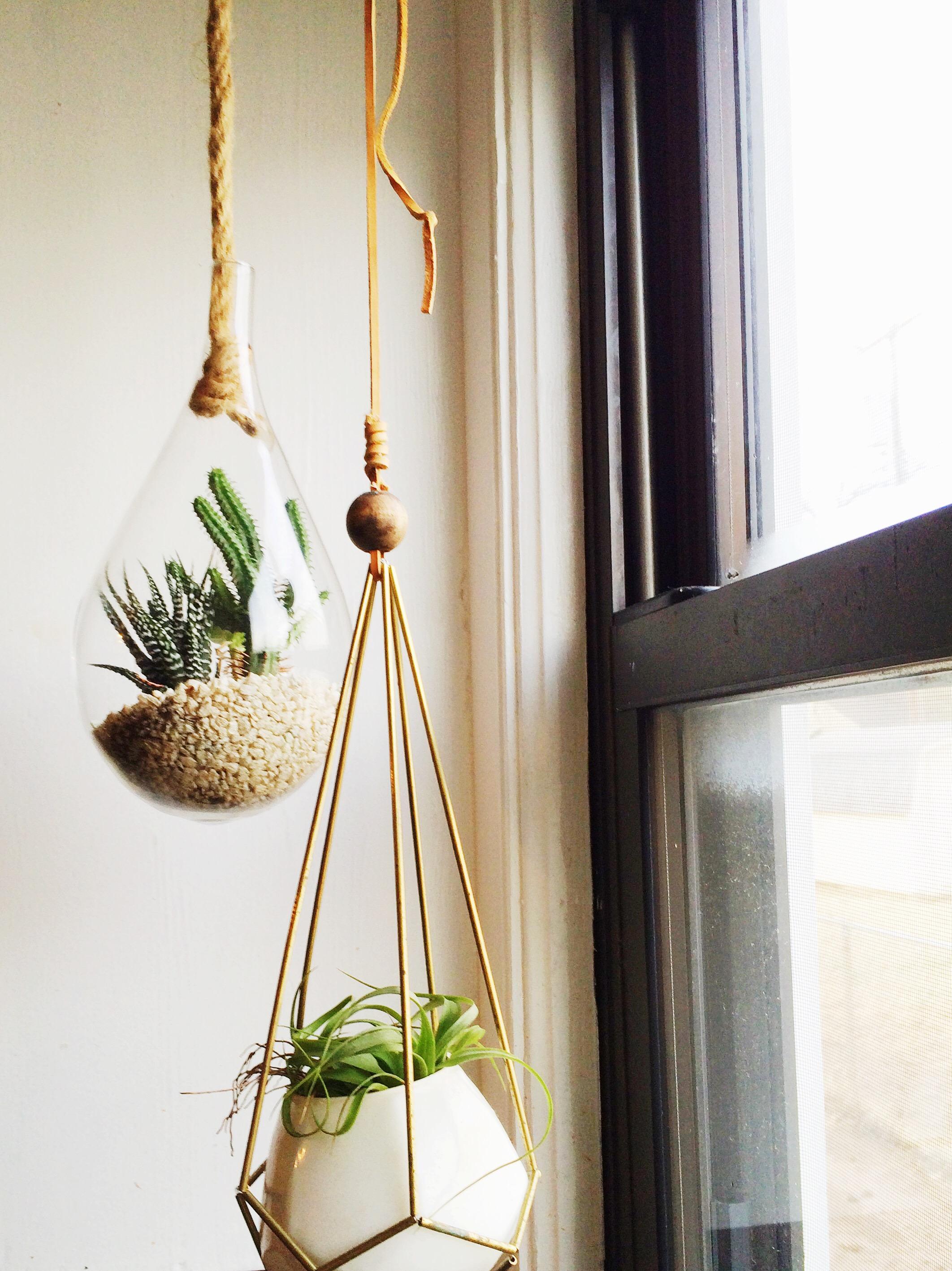 succulentshangingwindow