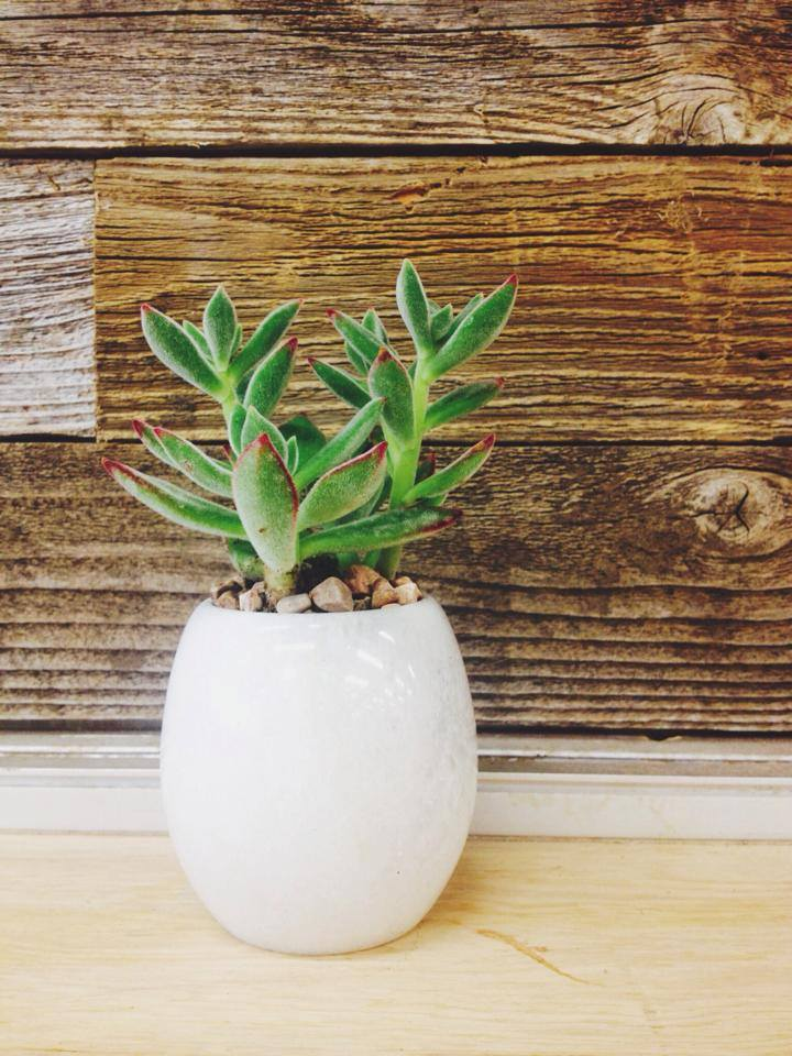 smallpottedsucculent