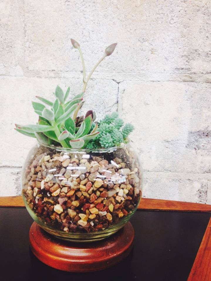 pottedsucculent