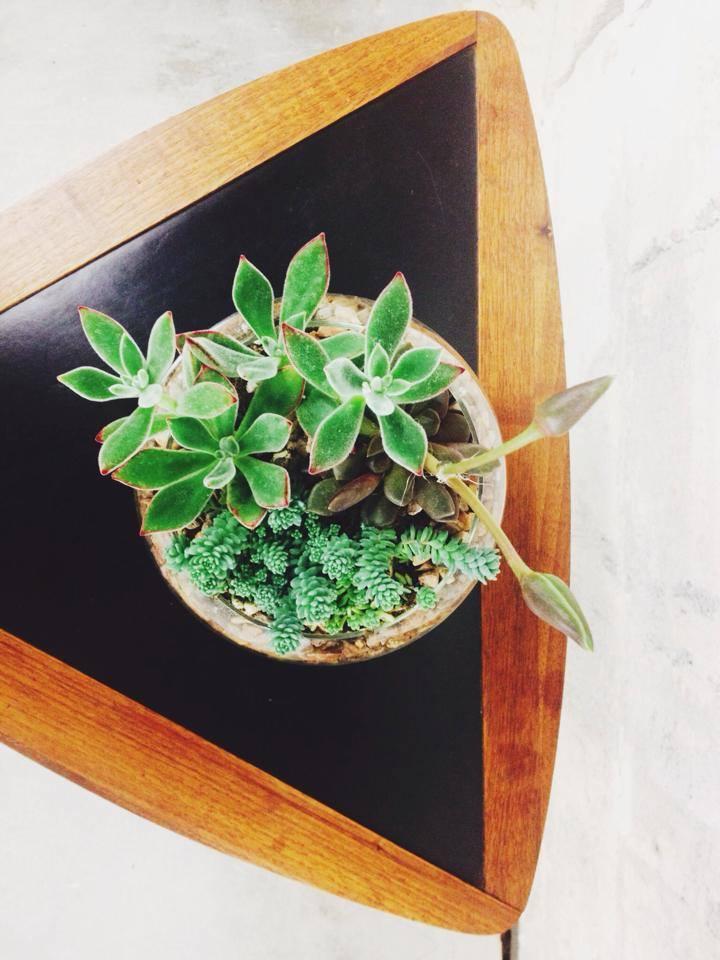 topviewsucculent
