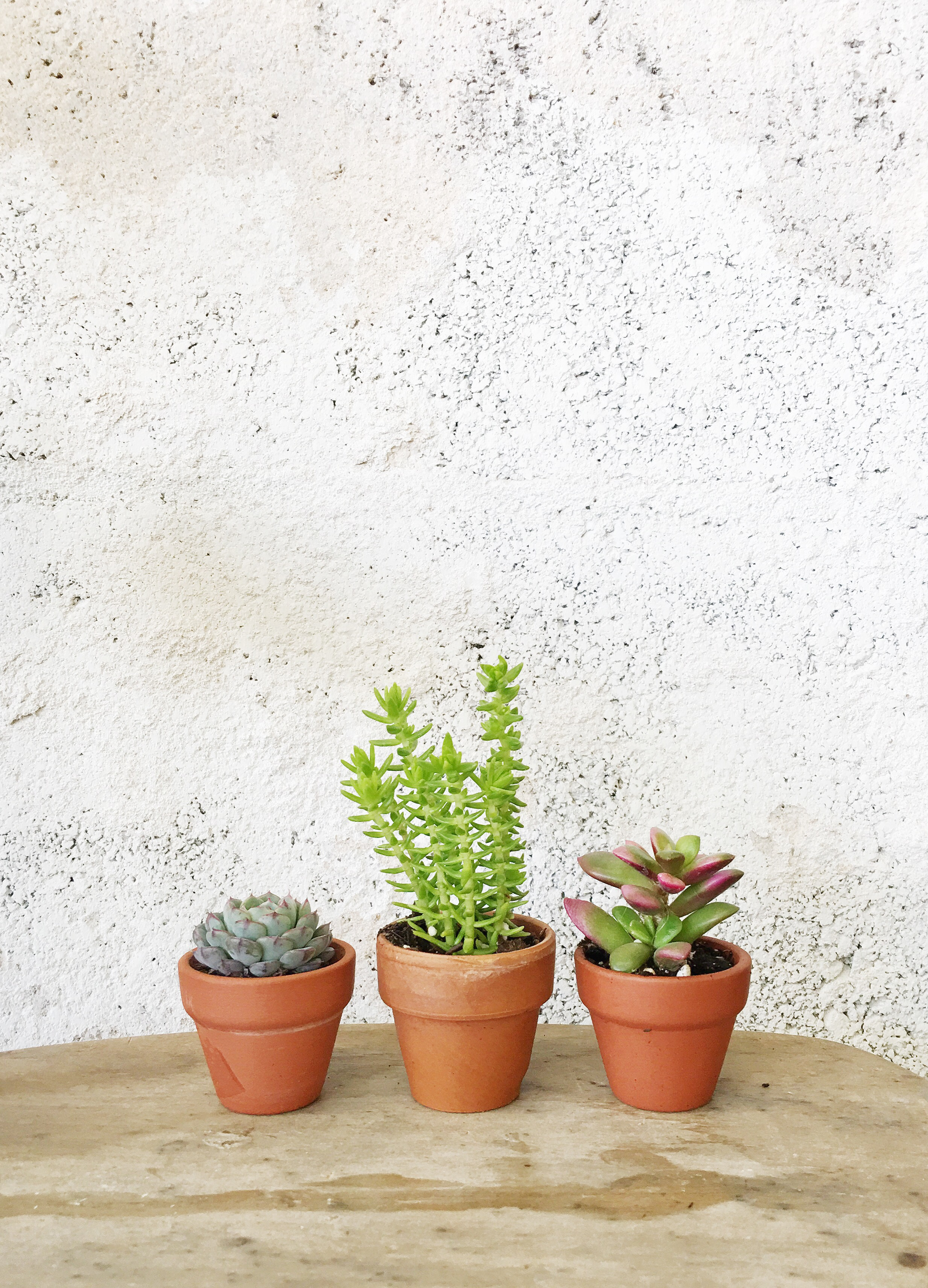 succulents that need more water