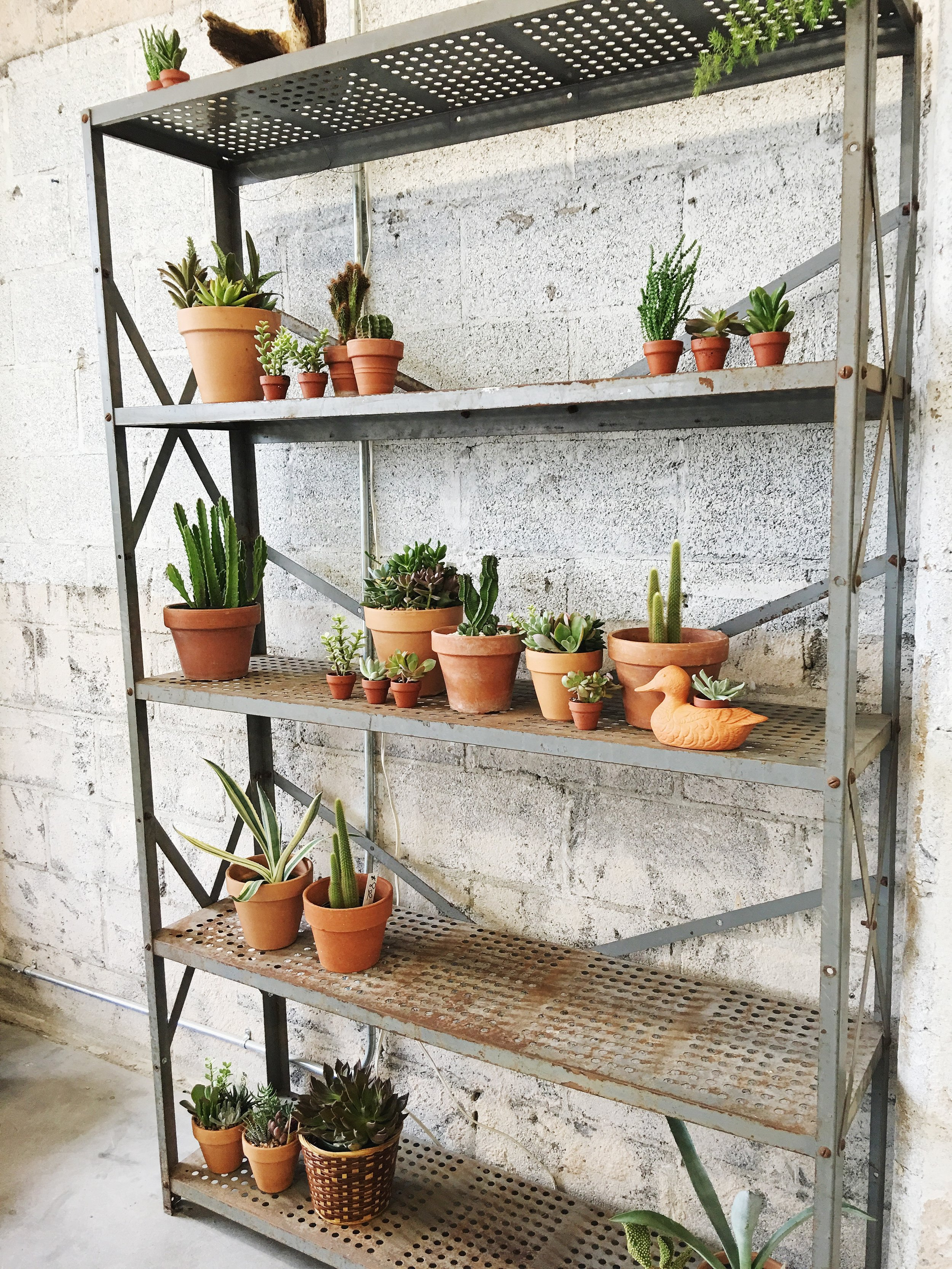 How Much And How Often To Water Succulents Retro Den Vintage