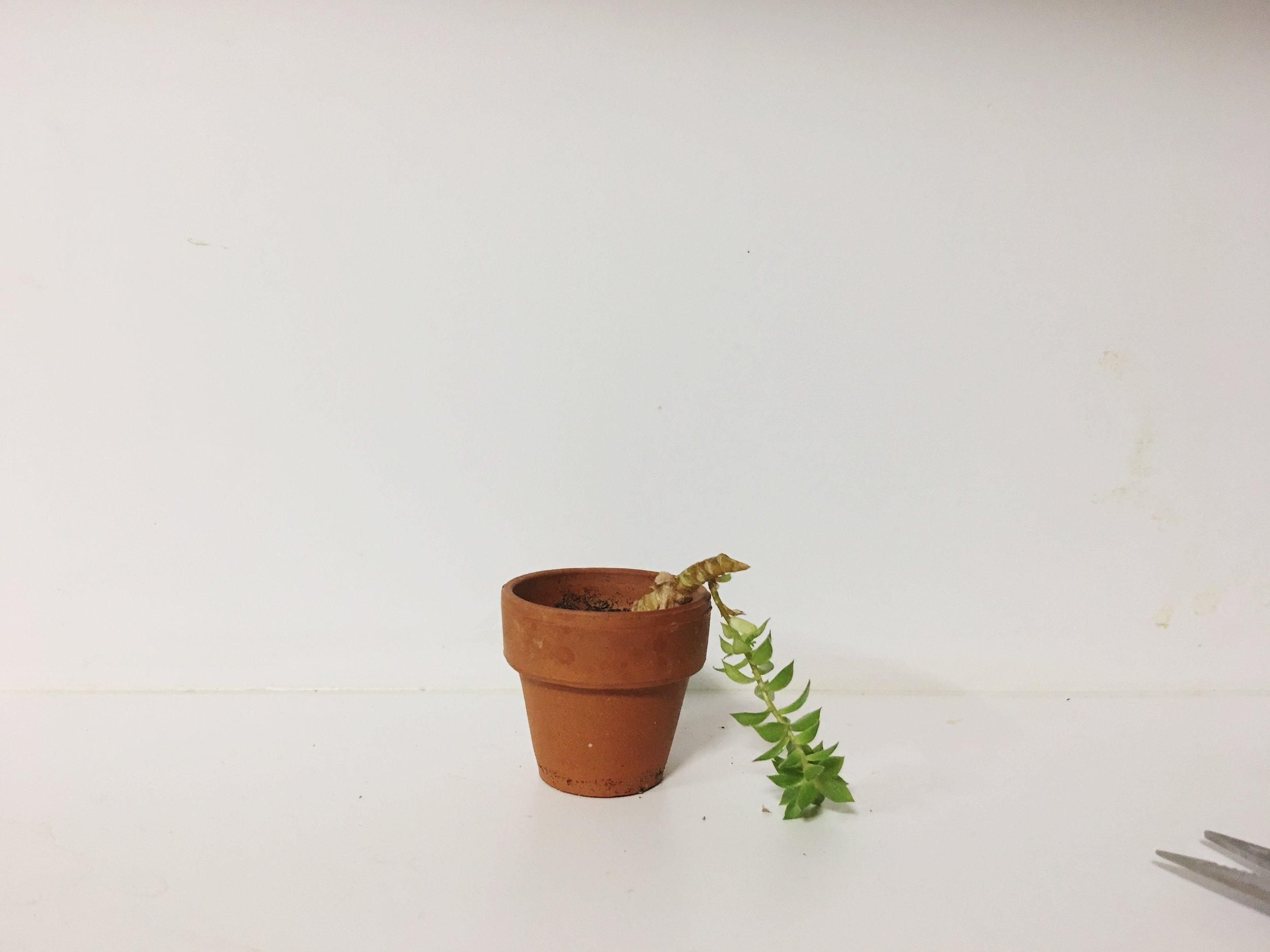 succulentbits