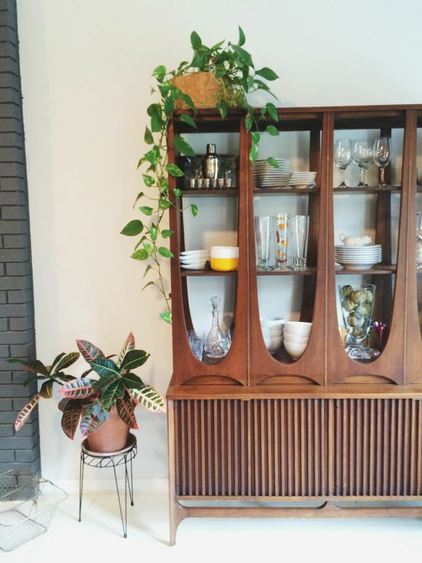 Our friend Drew's heart-leaf philodendron: see his  home tour