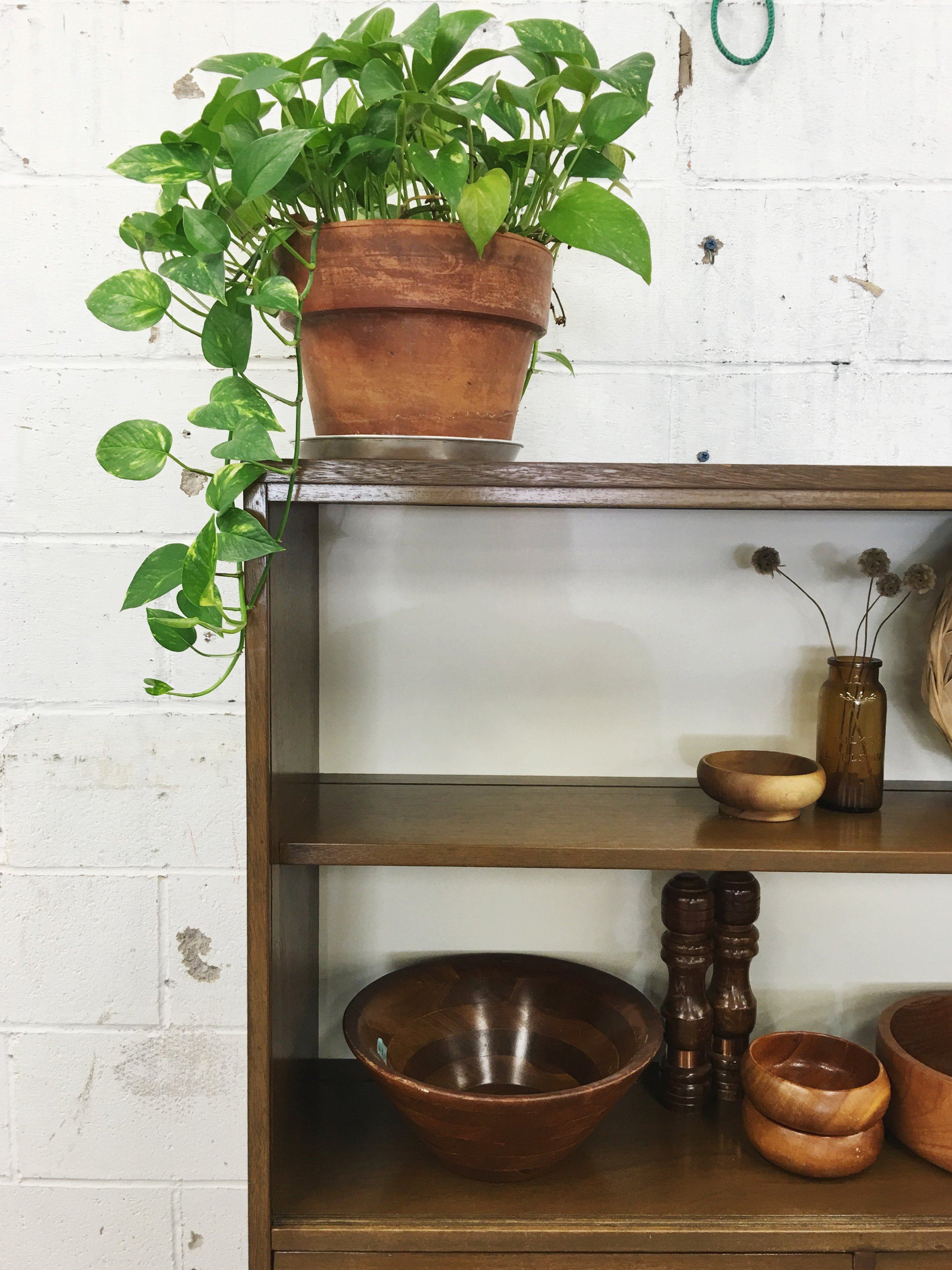 Our shop philodendron makes appearances in our styled shoots