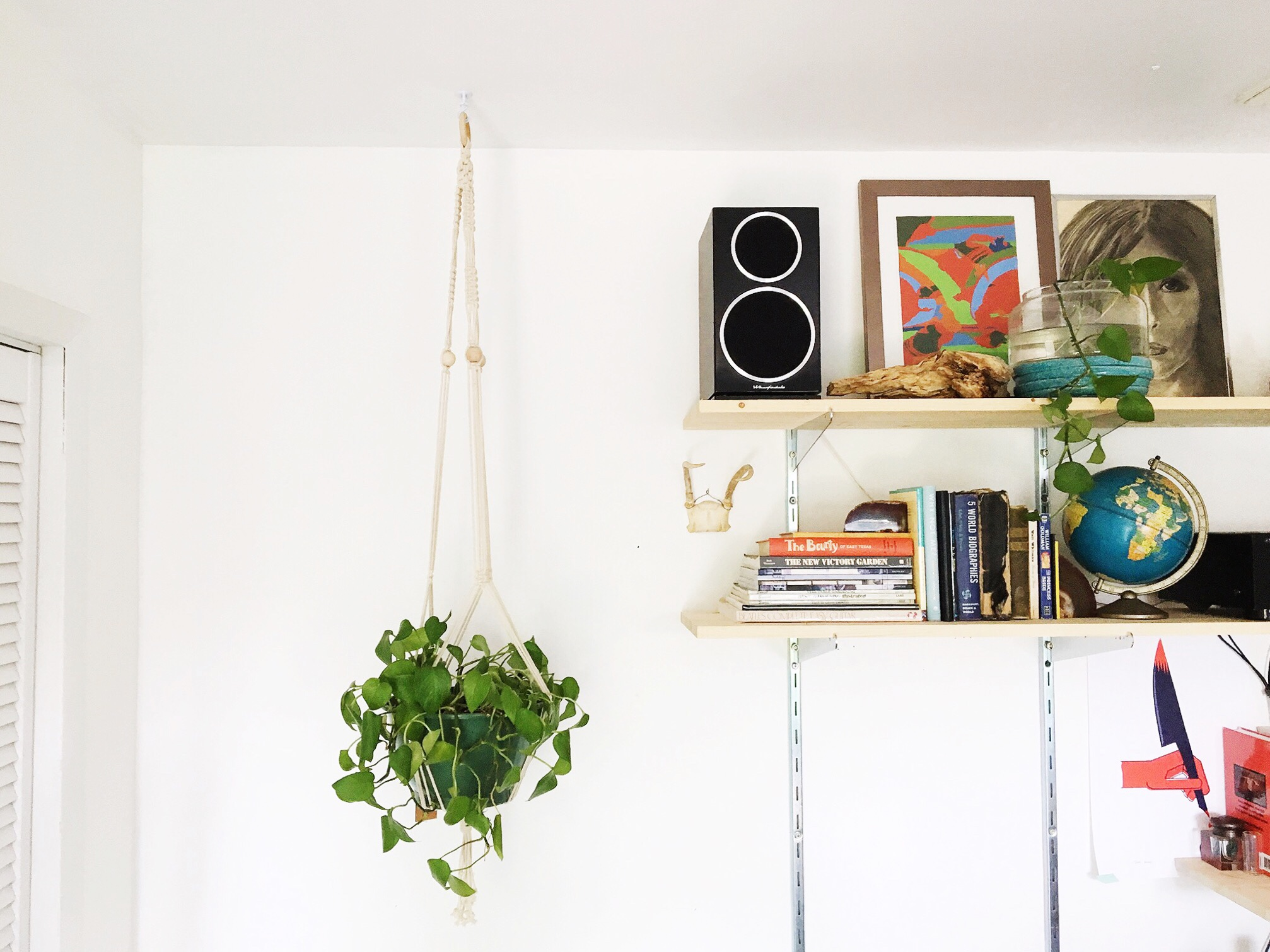 Hanging potted philodendron in  Daly's house.
