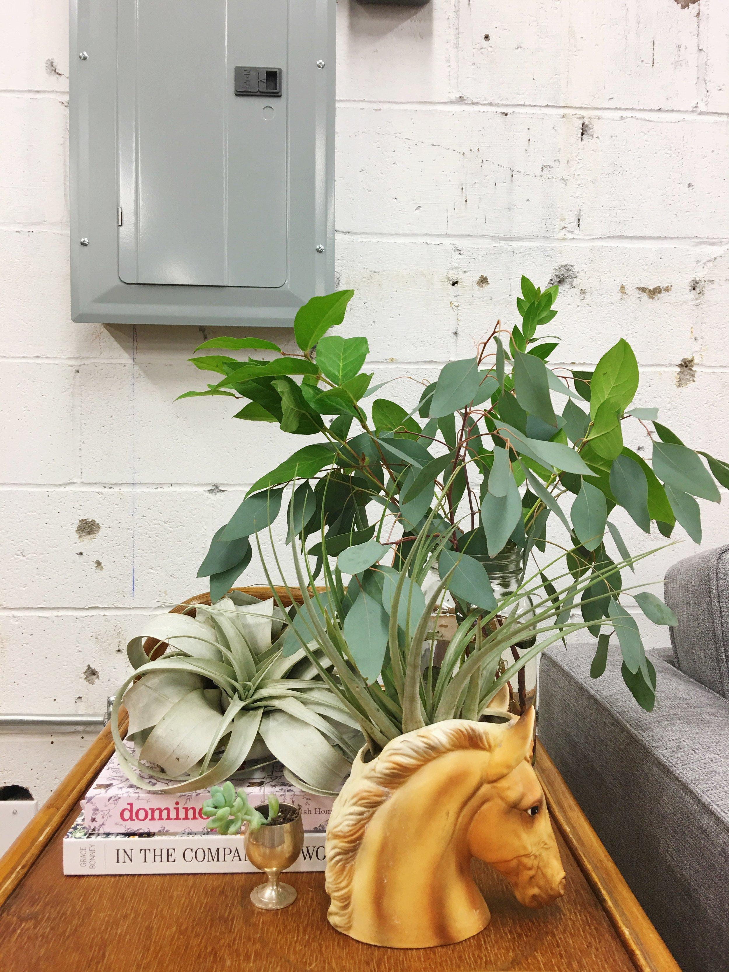 maximalist vignette air plant + vintage