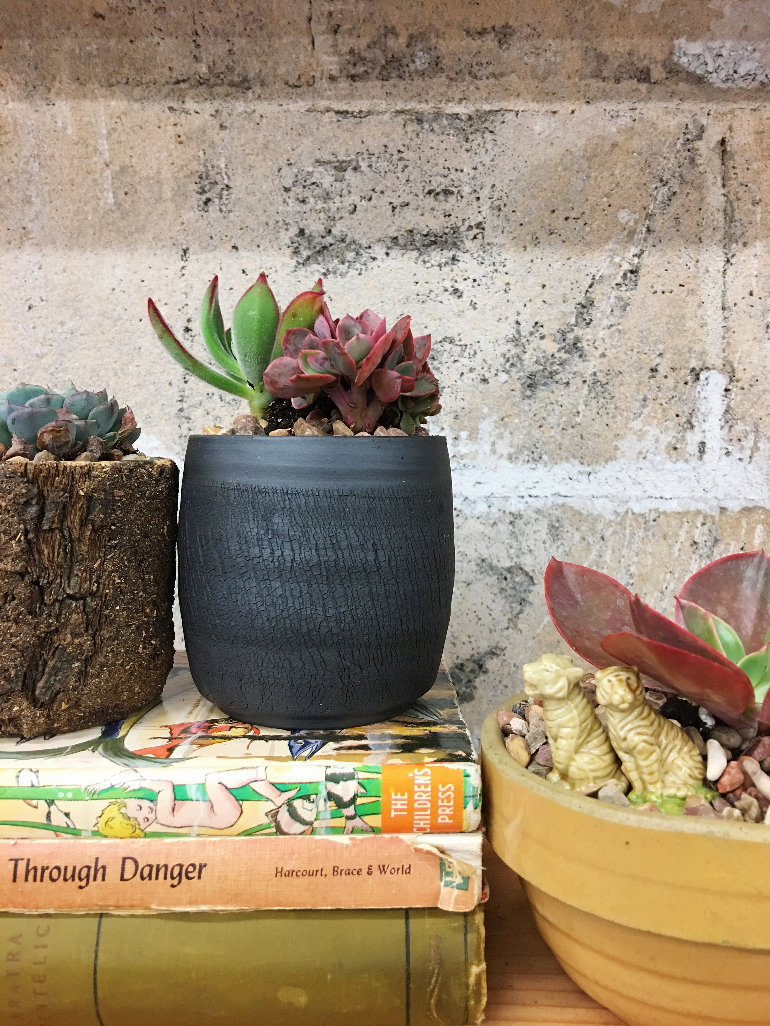 potted high light succulents