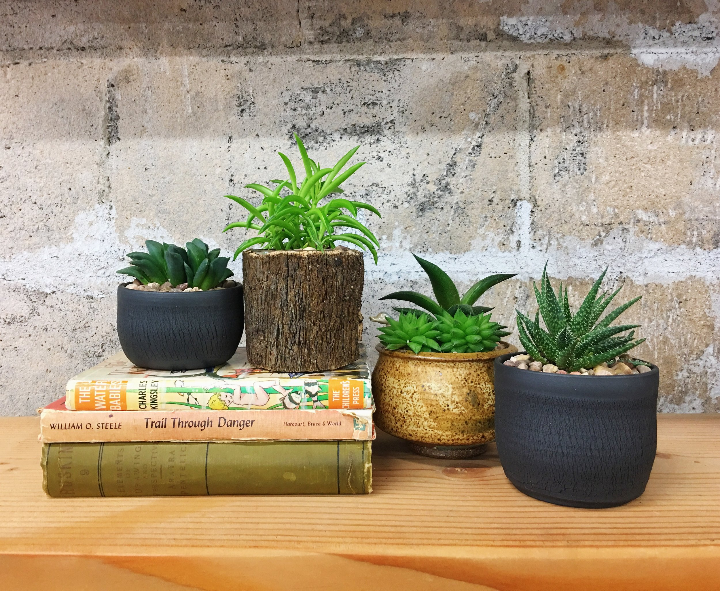Succulents are like goldfish and only grow as large as their containers; however, you may need to do a little maintenance after a year or two. Learn how  here .