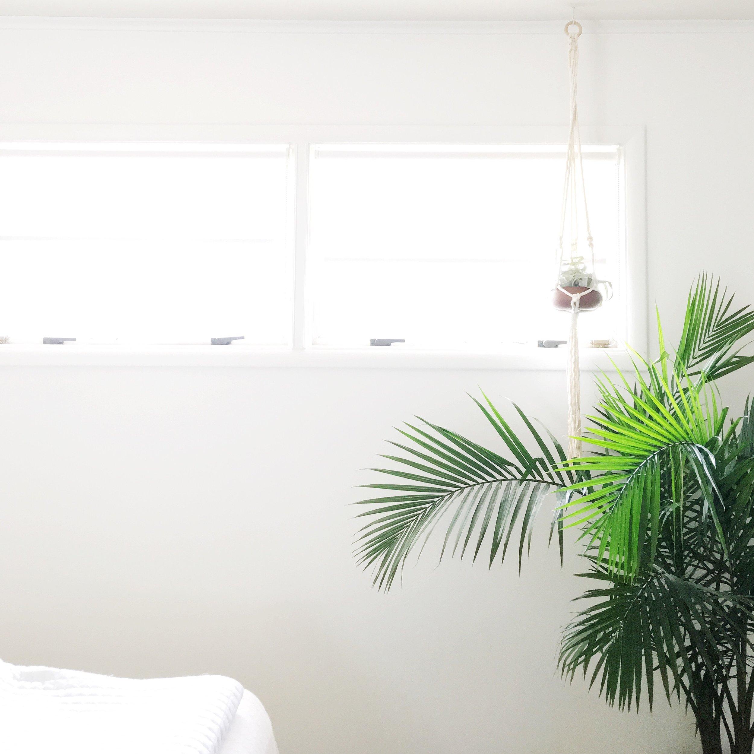 palm tree interior