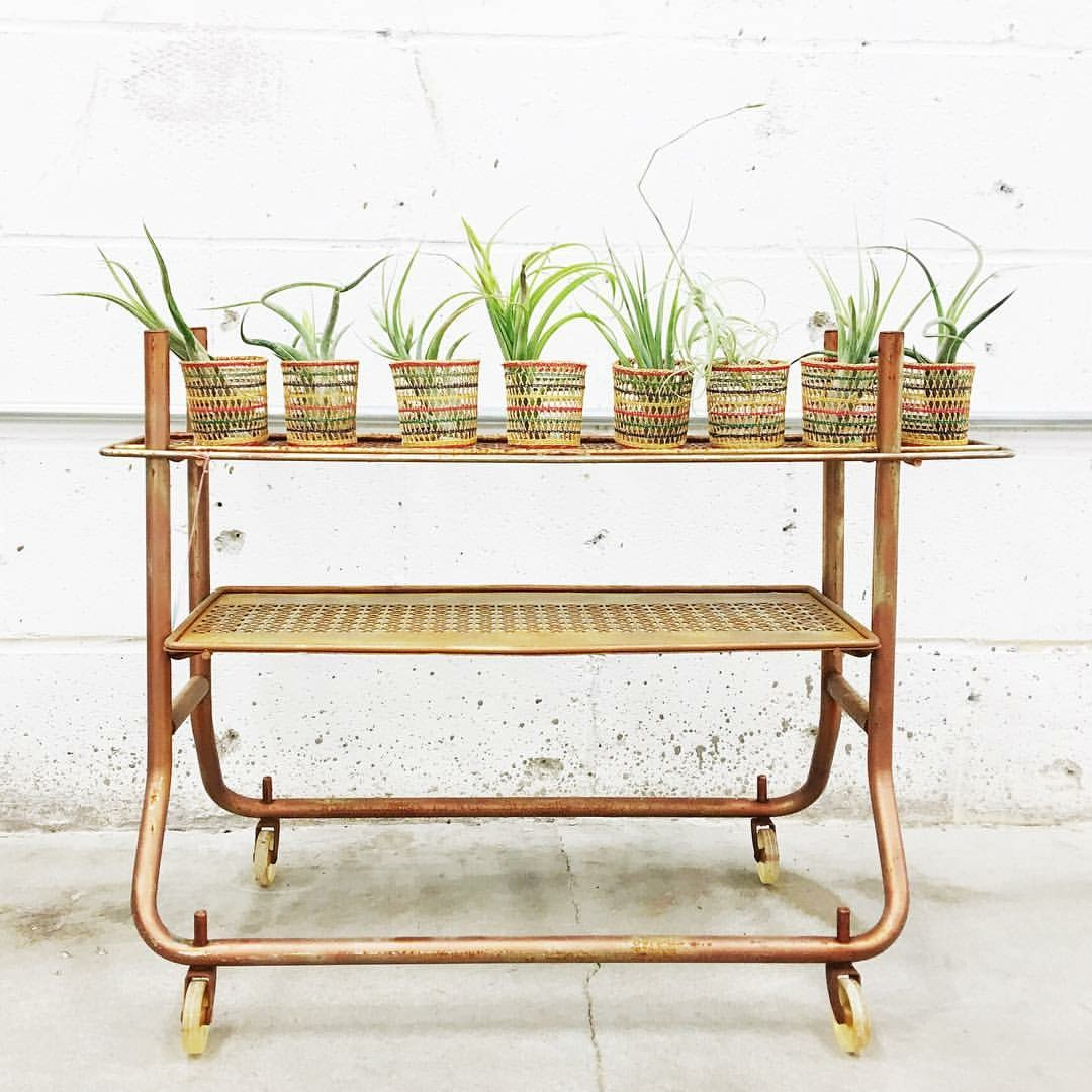 air-plants in baskets
