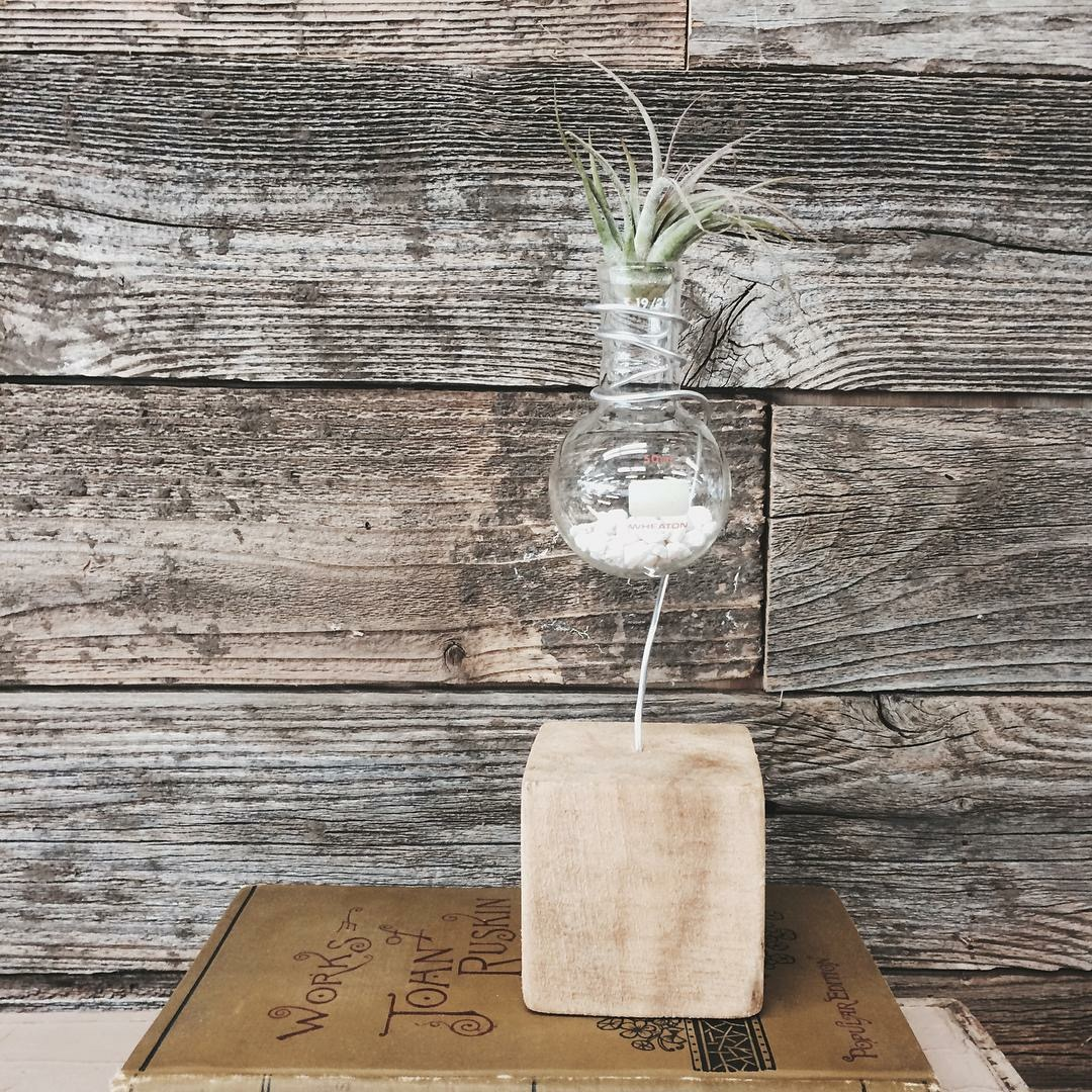 Drill a small hole in a wooden block. Insert thick, bendable wire. You can also skip the glass beaker and just have the wire hold the air-plant. Try different wire colors and lengths!
