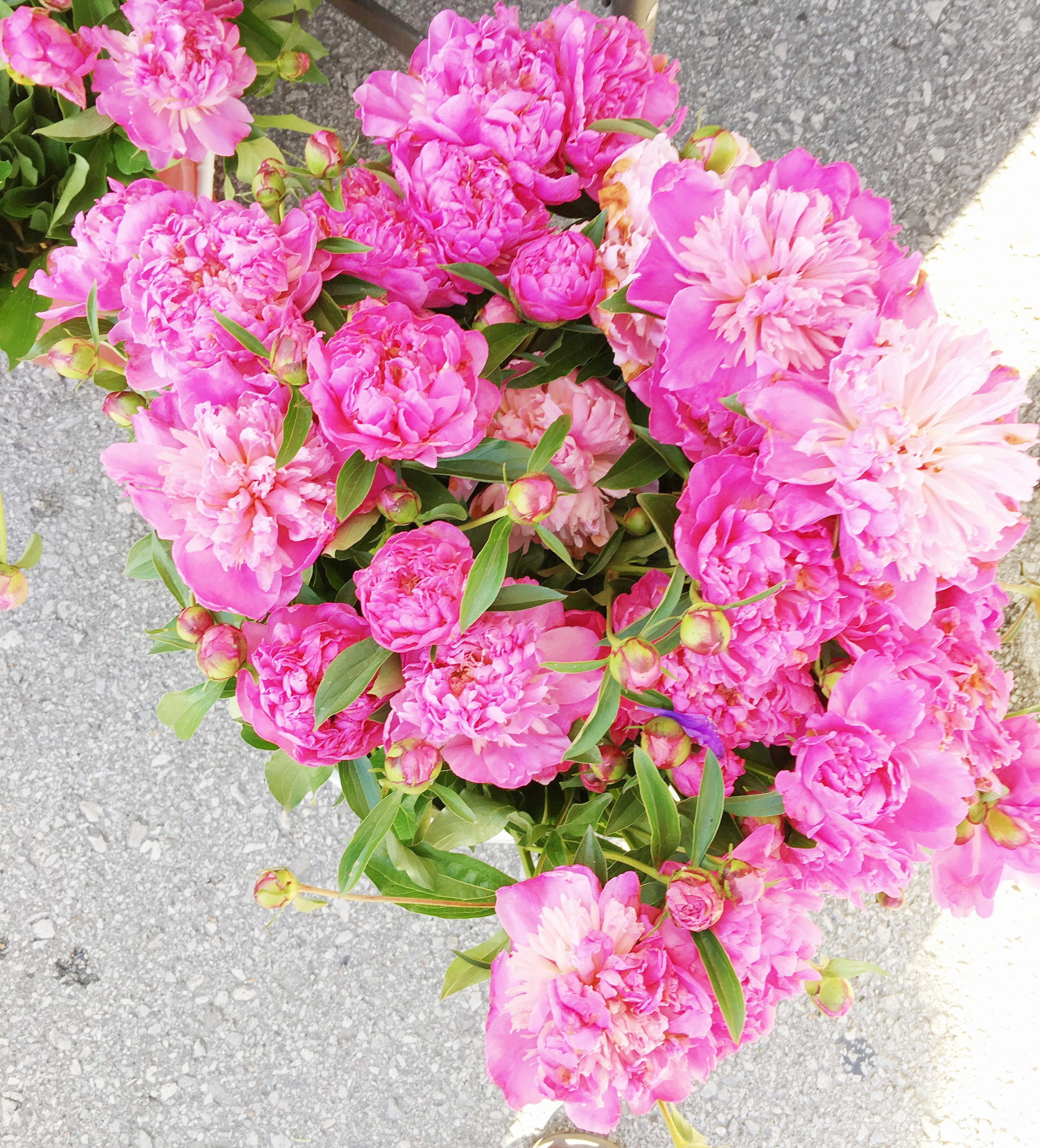 Peonies spotted at the Tulsa  Cherry Street Farmer's Market !
