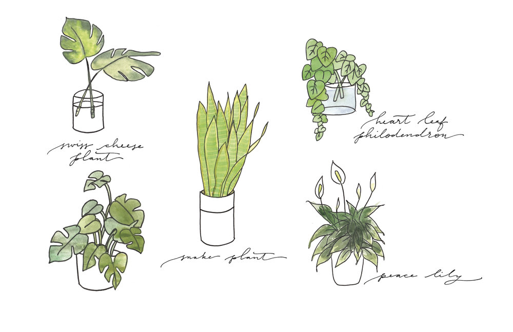 Happy day to you! Check out our  Beginner's Guide to Houseplants on  Cottage Hill today! // Beautiful sketches by  Laurel & Marie