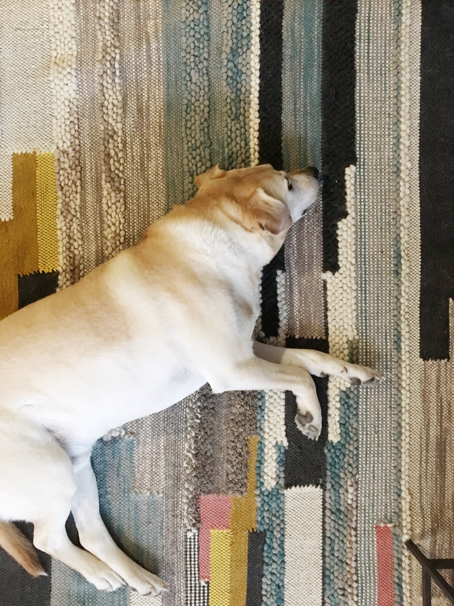 Steve, our client's dog, enjoyed our  home styling session  this week. He approved of all of our suggestions.