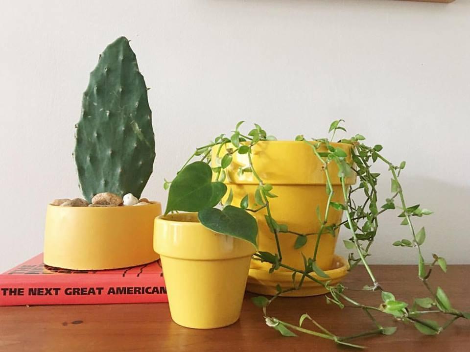 tulsa house plants