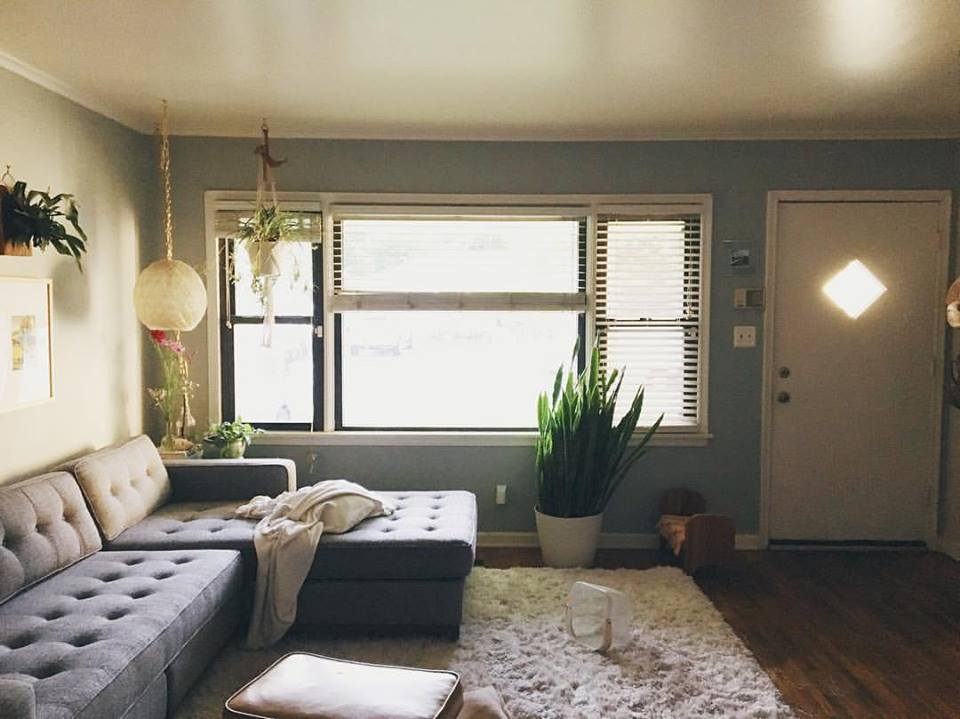 eclectic vintage home + snake plant