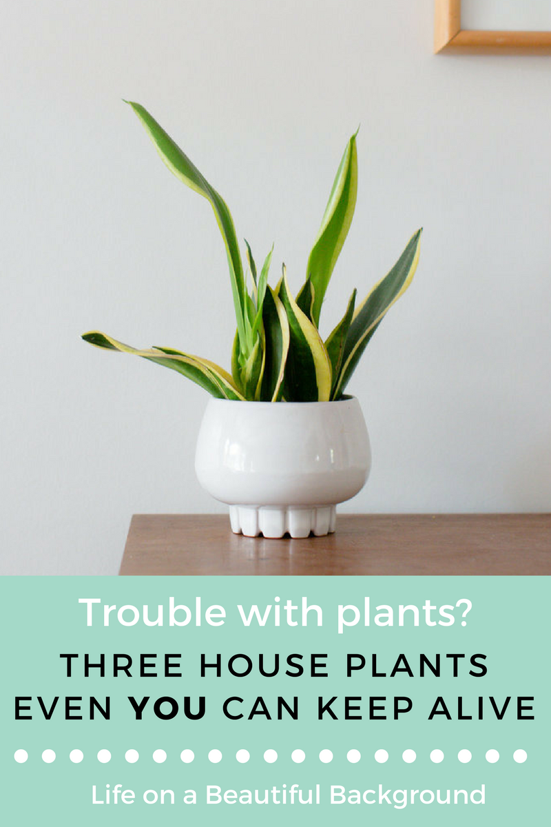 Easy House Plants.png