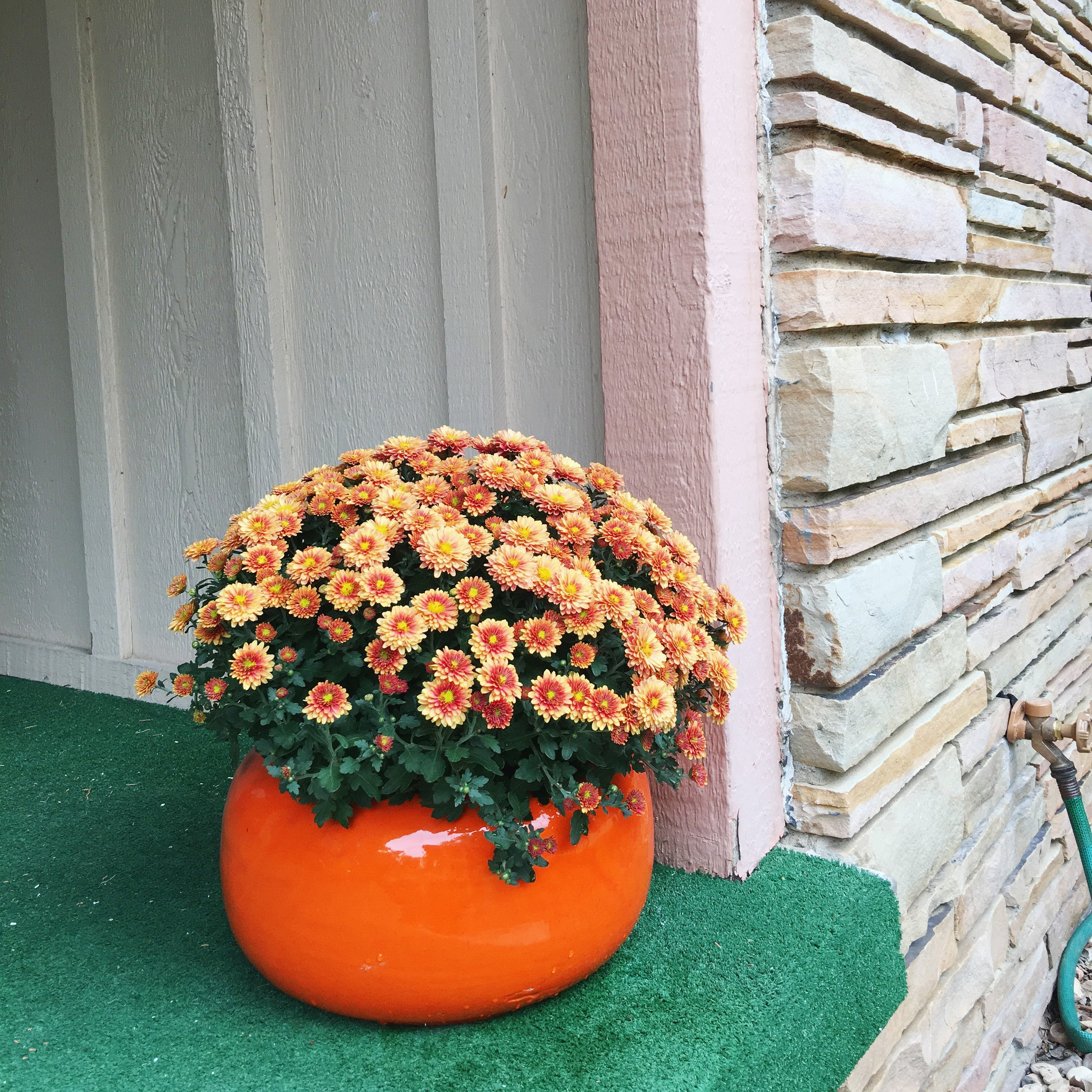 Palmer has fall fever as indicated by the mums on her front porch.