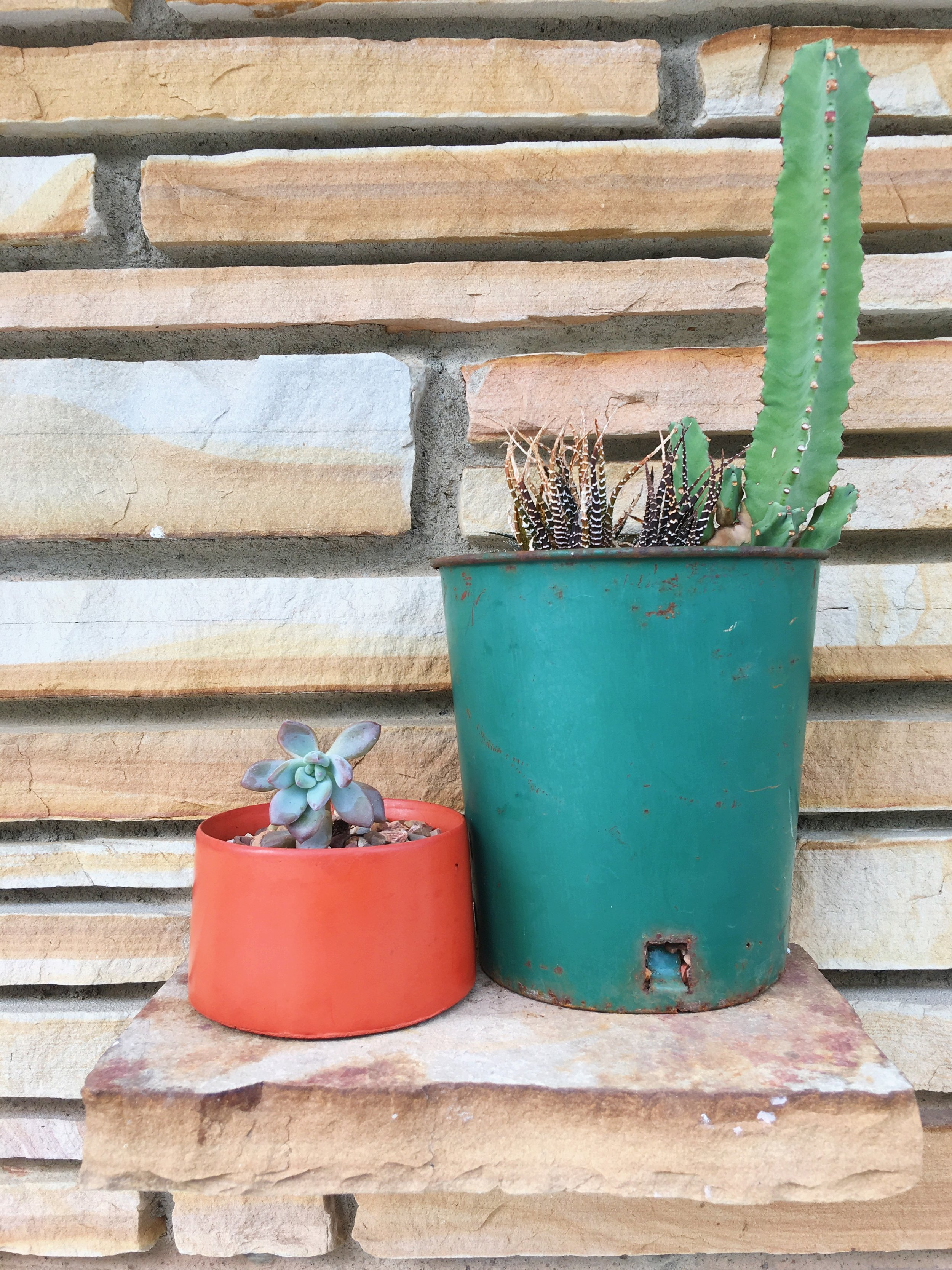 Palmer propagated a wee succulent this week and placed it in a Makerage concrete planter (which we carry in the shop!).