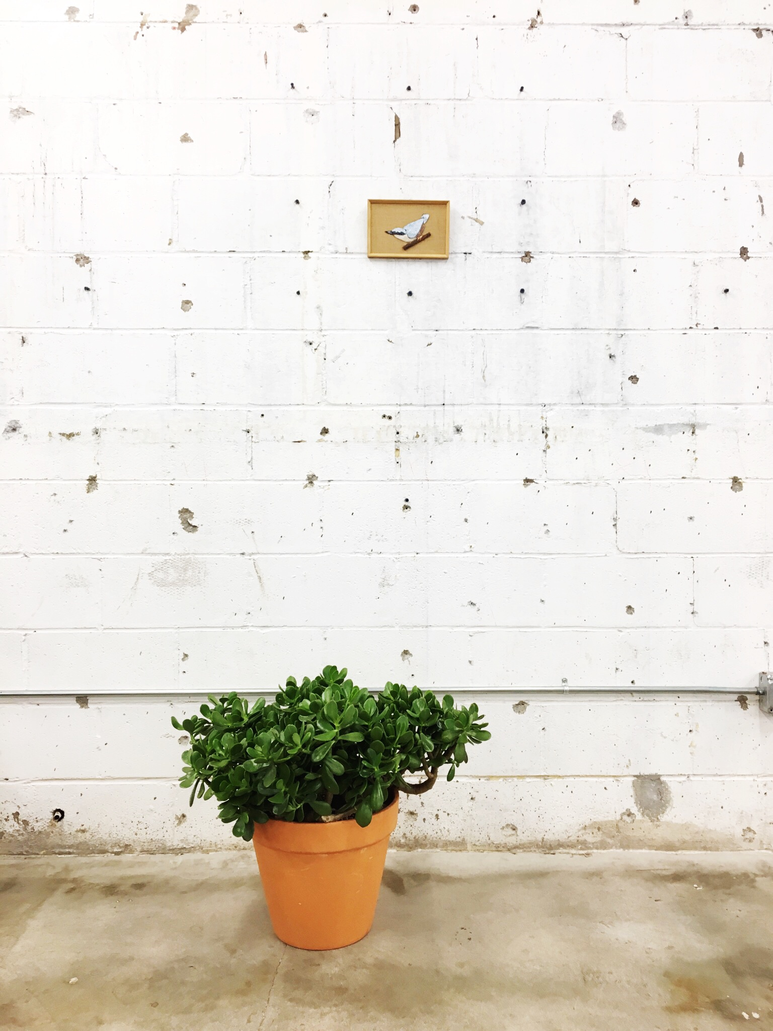 We helped a nice customer replant her thirty year old Jade plant, and we talked her into naming it Ashley...which was so nice of her and super exciting to us.