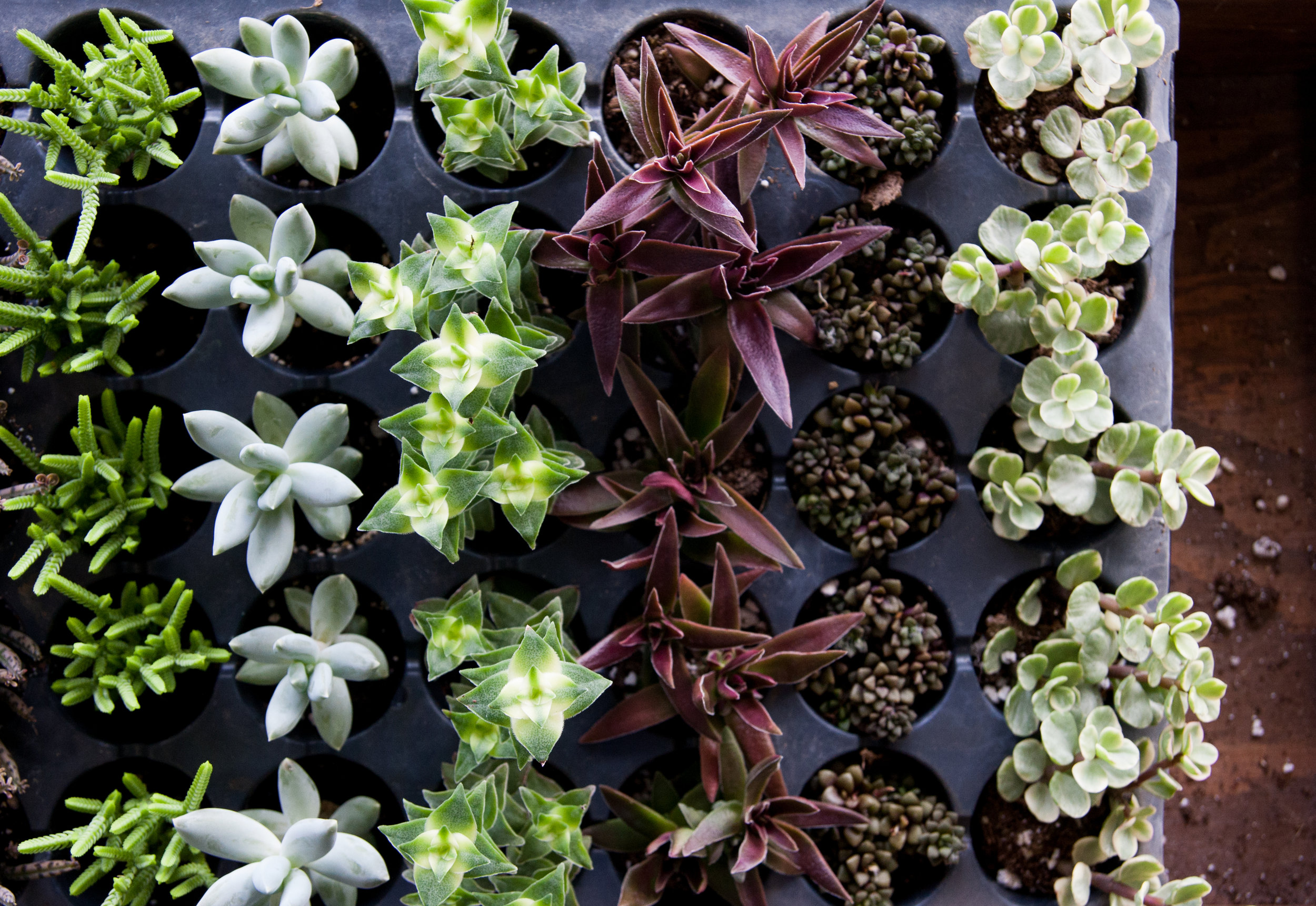 Succulent Saturday is TOMORROW, November 11! Come in and plant some plants and talk to the expert 11-6pm.