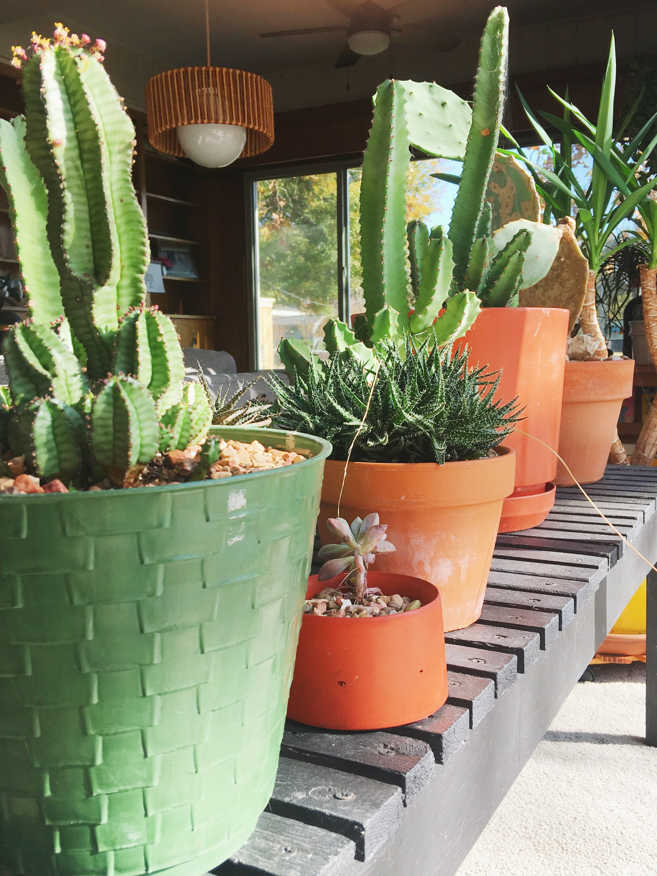 Palmer's outdoor succulents are still enjoying their new winter life indoors. How are your plants doing so far this winter?