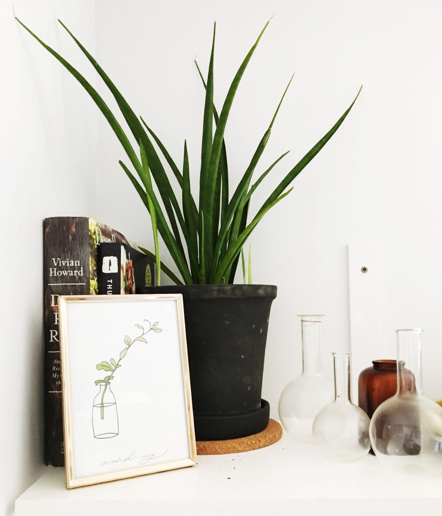Plant print by  Laurel & Marie