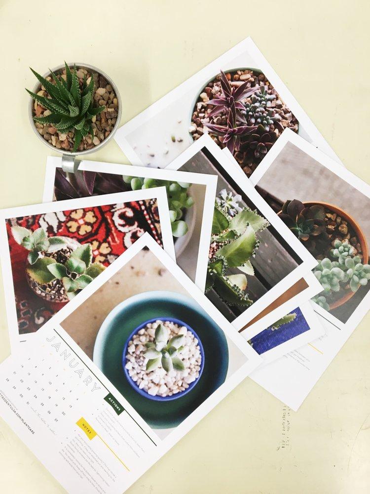 succulent care calendar