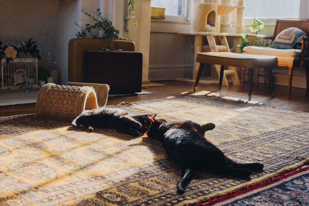 Felix and Pumpkin basking in the apartment's natural light.