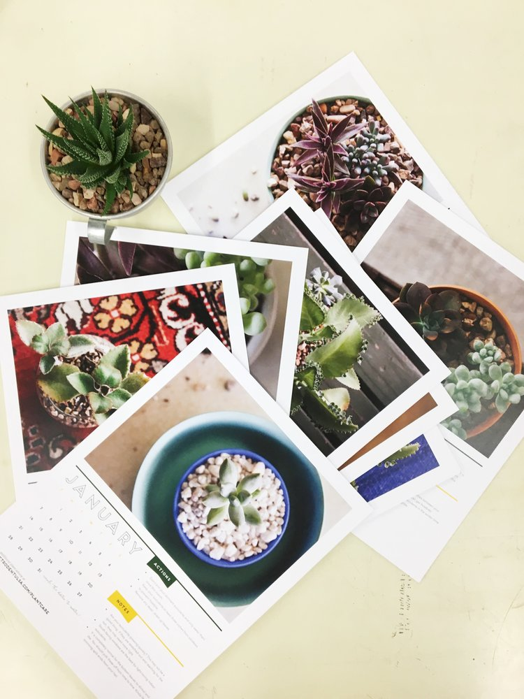 succulent+calendar.jpeg