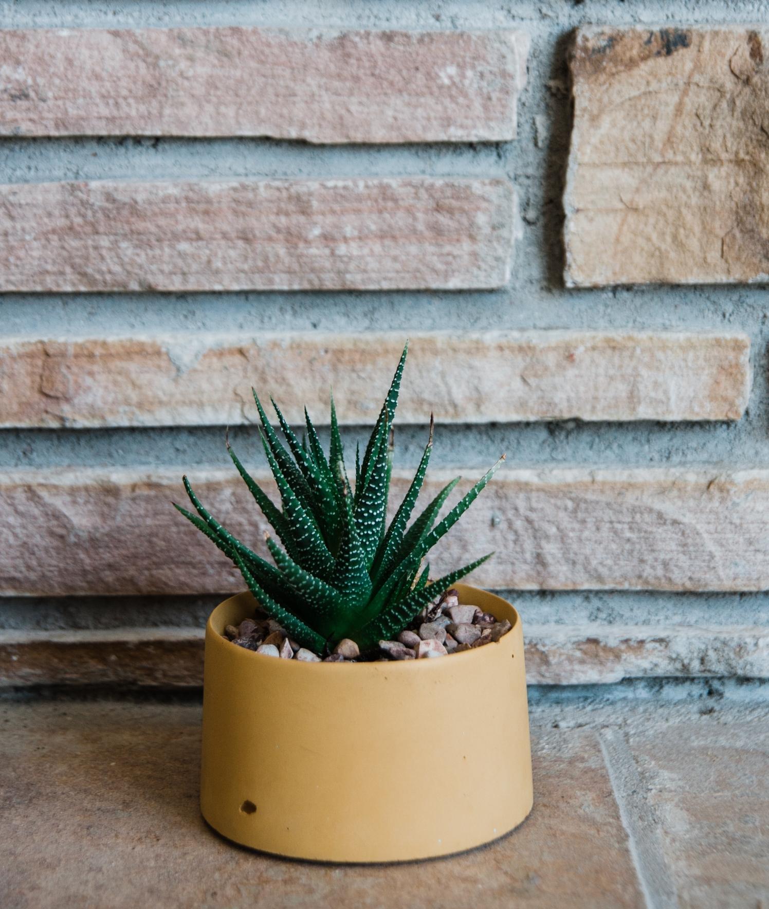 cactus_blog-2.jpg